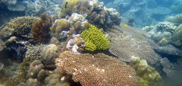 Propadanje korala petostruko veće nego 1980-ih