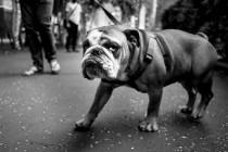 Šarolika osobnost pasa