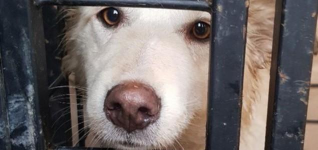 Ubijanje pasa u Rusiji zbog fudbala