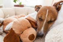 Sezona je krpelja koji mogu uzrokovati smrtonosne bolesti kod pasa