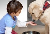 Evo najboljeg odgovora zašto su kućni ljubimci dobri za vaše zdravlje!