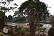 Auckland: Oluja ostavila hiljade domova bez električne energije