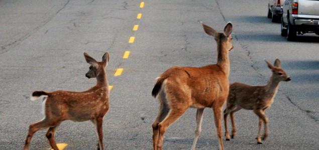 Ljudi prouzrokovali nestanak 83 posto divljih sisara i polovine biljaka