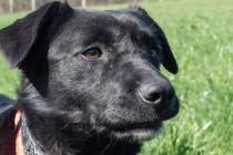 Zašto je toliko teško pronaći obitelj i dom crnim psima?