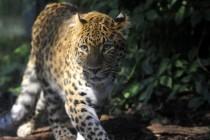 Pošumljavanje u Kini rezultiralo povratkom rijetkih životinja