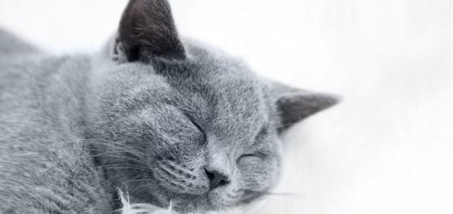Saznajte 9 načina kako da vaša mačka u kući bude sretna
