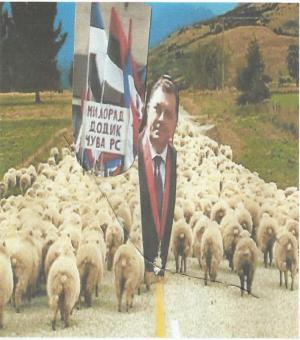 dodik ovce