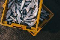 WWF upozorava: nestane li ribe, nestat će i ljudi