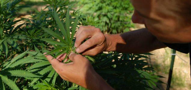 Kanada od srijede legalizira marihuanu