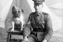 Heroji Prvog svetskog rata: Životinje koje su bile deo savezničke ratne mašinerije