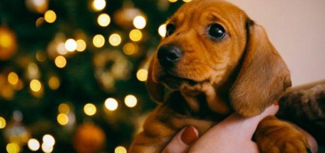 Nemačka: Nema udomljavanja pasa tokom novogodišnjih praznika