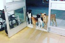 Beskućnika ispred bolnice čekala 4 psa o kojima se brine bolje nego o sebi
