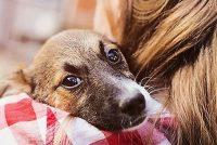Raspisane nagrade za udomljavanje pasa