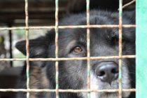 Onome tko udomi psa, općina Jelenje će prvih godinu dana kupovati hranu