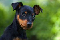 Misteriozni ljubimci: 7 neobičnih činjenica o psima koje mnogi ne znaju