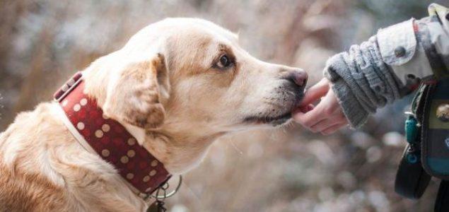 """Psi mogu """"nanjušiti"""" epileptični napad kod ljudi prije nego što se dogodi"""