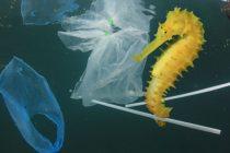 Zabrinjavajuće prognoze UN: Do 2050. u morima će biti više plastike nego ribe