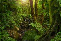 Svet u 2018. godini ostao bez 12 miliona hektara tropskih šuma