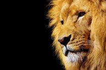 Engleska uskoro zabranjuje divlje životinje u cirkusima: 'To nisu mjesta za divlje životinje u 21. stoljeću'