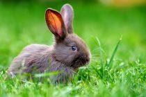 Saznajte što trebate napraviti ako pronađete gnijezdo sa zečićima