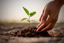 Naučnici upozoravaju: Biljke nestaju dva puta brže od životinja