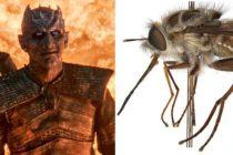 Igra prestola i Noćni kralj: Australijska muva dobila ime po liku iz HBO serije