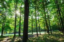 Naučnici tvrde: Sadnja trilion stabala je najbolji način za borbu protiv klimatskih promena