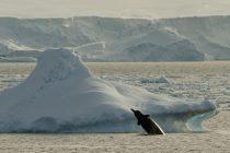 Pesma kitova otkrila jednu od tajni Antarktika