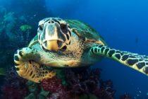 Otkrivene kornjače koje svetle u mraku – i to u različitim bojama