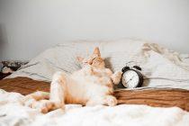 Život u usporenom filmu: Kako životinje doživljavaju vreme?