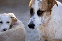 Prijatelji životinja upozoravaju na napuštanje pasa i mačaka zbog ljetovanja
