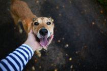 Zašto su psi tako druželjubivi? Nauka ima odgovor