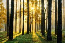 Velika akcija Adrija Medija Grupe i DM Drogerie Markta: Šume su najveći prirodni resurs