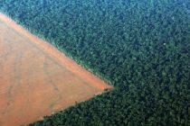 Ugrožena amazonska prašuma u politici desničara Bolsonara