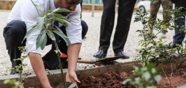Etiopija postavila novi rekord: 200 miliona stabala drveća zasađeno u jednom danu