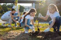 Divan projekat: Svi đaci prvaci u Beogradu od 15. oktobra sade svoje drvo