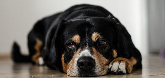 Grad slučaj: I pse ubijaju, zar ne!