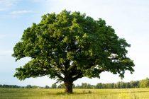 Polovini vrsta drveća u Evropi preti nestajanje