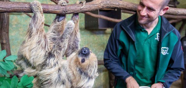Upoznajte Paulu, ženku najstarijeg lenjivca na svetu