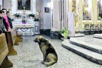 Svećenik iz Brazila pušta pse na misu, a razlog je prekrasan