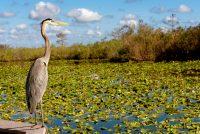 Populacija ptica u Severnoj Americi smanjila se za četvrtinu