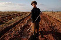 UN: Neuhranjeno 11 miliona Sjevernokorejaca