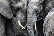 Najmanje 55 slonova umrlo od gladi u nacionalnom parku u Zimbabveu