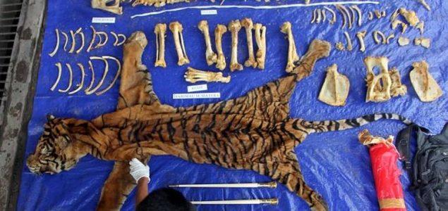 Izvještaj: Za 19 godina ubijeno više od 2.300 tigrova