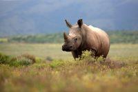 Opasnost po bioraznolikost: Na trgovini divljim životinjama zarađuju se milijade
