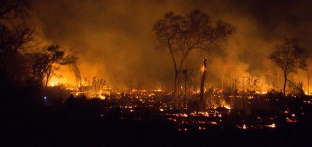 Više od 2 miliona životinja stradalo je u požarima koji su besneli šumama Bolivije