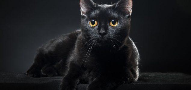 Najveće žrtve predrasuda: 5 zanimljivosti o crnim mačkama