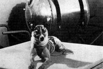 4 životinje koje su promenile tok istorije
