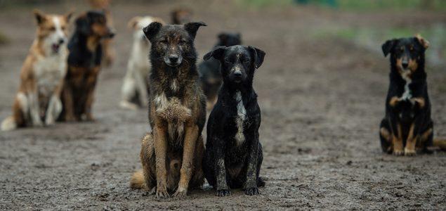 Hrvatska veterinarka o koronavirusu: Evo što se događa s ljubimcima u Kini