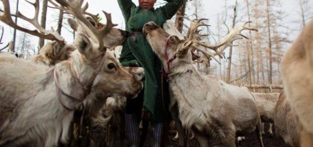 Pleme Dukha u Mongoliji već vijekovima živi s irvasima i vukovima